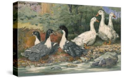 A Painting of Blue Swedish Ducks and Aylesbury Ducks-Hashime Murayama-Stretched Canvas Print