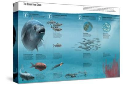 The Ocean Food Chain; Predators, Consumers and Producers-Hernan Canellas-Stretched Canvas Print