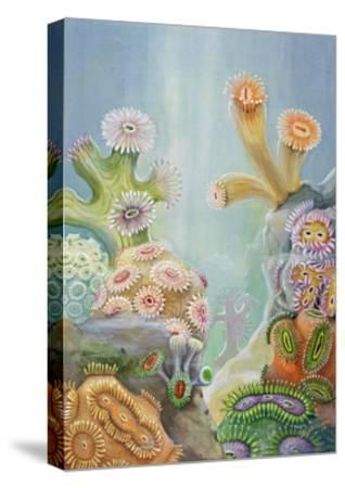 Coral Polyps Reproduce by Splitting in Half-Else Bostelmann-Stretched Canvas Print