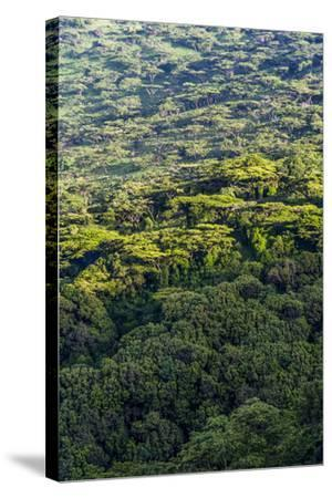 Dawn Lights a Dense Evergreen Forest and Highland Trees on the Steep Slopes of a Volcano Crater-Jason Edwards-Stretched Canvas Print