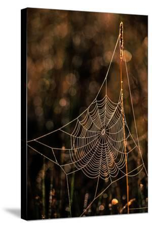 Dew on a Spider Web-Tom Murphy-Stretched Canvas Print