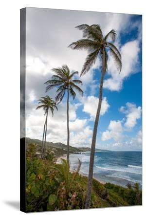 The Palm Lined and Rocky Beach at Bathsheba-Matt Propert-Stretched Canvas Print