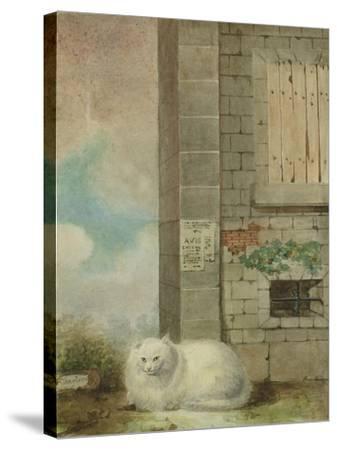 White Persian Cat-Laslett John Pott-Stretched Canvas Print