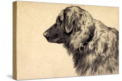 Präge Hund, Seitenprofil Mit Hundehalsband--Stretched Canvas Print