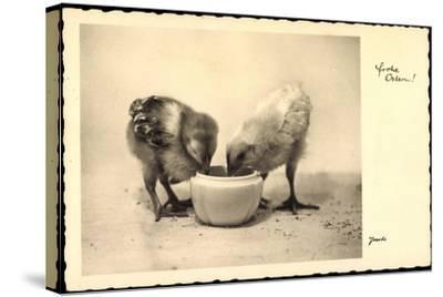 Frohe Ostern, Küken Trinken Aus Wasserschale, Amag--Stretched Canvas Print