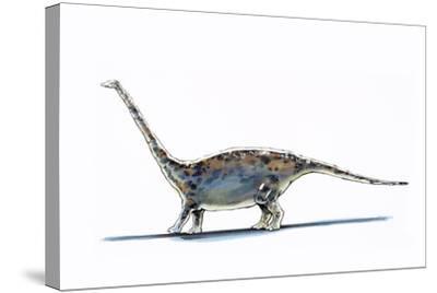 Illustration of Barapasaurus - Artwork--Stretched Canvas Print