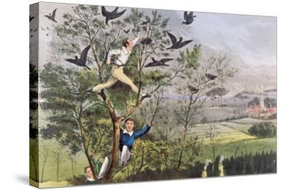 "Who-Whoop! I'Ve Done it - Raiding the Rookery from Nimrod's ""The Life of a Sportsman, 1874""--Stretched Canvas Print"