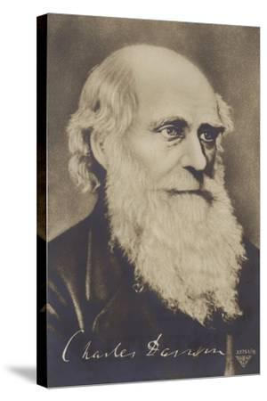 Charles Darwin--Stretched Canvas Print