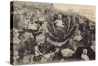 Babies in the Cabbage Patch--Stretched Canvas Print