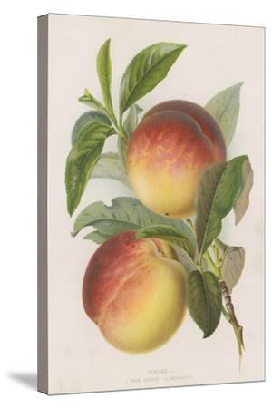 Peaches--Stretched Canvas Print
