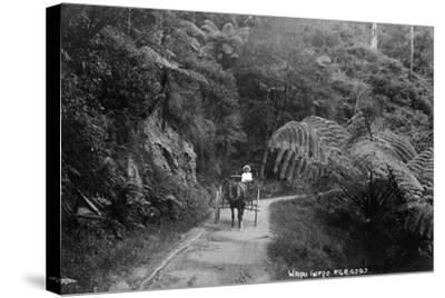 Waipu Gorge--Stretched Canvas Print