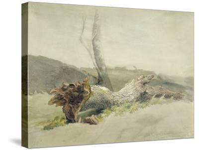 The Fallen Tree, C.1804-Robert Hills-Stretched Canvas Print