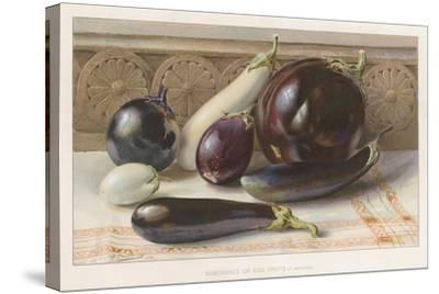 Aubergines or Egg Fruits--Stretched Canvas Print