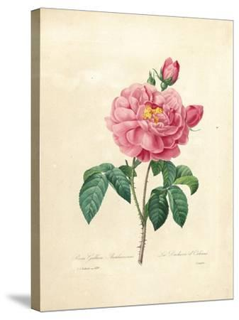 The Duchess of Orleans Rose-Pierre-Joseph Redout?-Stretched Canvas Print