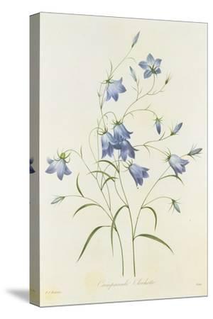 Campanula, from 'Choix Des Plus Belles Fleurs', 1827-33-Pierre-Joseph Redout?-Stretched Canvas Print