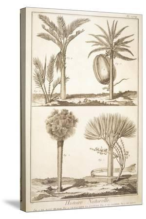Plate Showing Palm Tree Types: Dragon's Blood--Stretched Canvas Print
