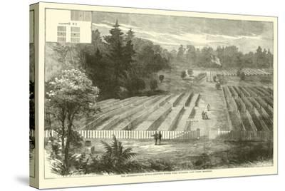 The Andersonville Burial-Grounds Where Were Interred 14,000 Union Prisoners, May 1865--Stretched Canvas Print