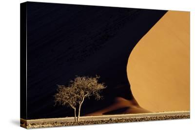Namibia, Namib-Naukluft Park. Red Sand Dunes Contrast and Tree-Jaynes Gallery-Stretched Canvas Print