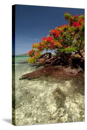 Christmas Tree at Vonu Point, Turtle Island, Yasawa Islands, Fiji-Roddy Scheer-Stretched Canvas Print