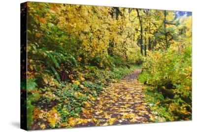Fall Colors Add Beauty Trail, Silver Falls State Park, Oregon-Craig Tuttle-Stretched Canvas Print