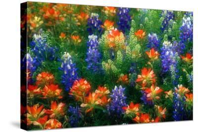 Bluebonnets and Paint Brush-Darrell Gulin-Stretched Canvas Print