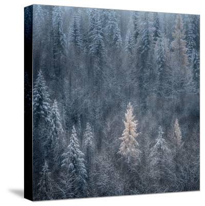 First Snow-Ursula Abresch-Stretched Canvas Print