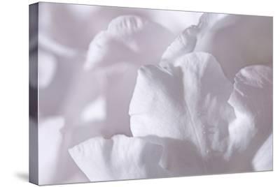 Rosy Petals II-Rita Crane-Stretched Canvas Print