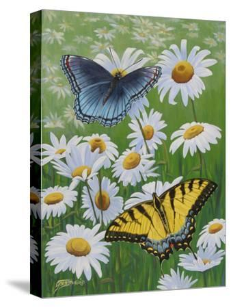 Butterflies and Daisies-Fred Szatkowski-Stretched Canvas Print