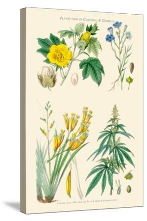 Plants Used in Clothing and Cordage. Cotton, Flax, New Zealand Flax, Cannabis-William Rhind-Stretched Canvas Print