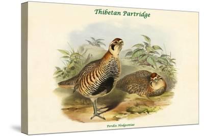 Perdix Hodgsoniae - Thibetan Partridge-John Gould-Stretched Canvas Print