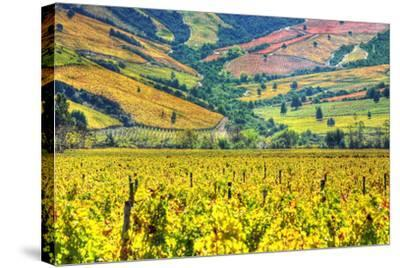 Vineyards (Hdr) - Valle Colchagua-Fotograf??as Jorge Le??n Cabello-Stretched Canvas Print