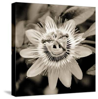 Blooming Flowers 5664-Rica Belna-Stretched Canvas Print