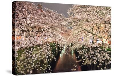 Sakura at Nakameguro-By CaDs-Stretched Canvas Print