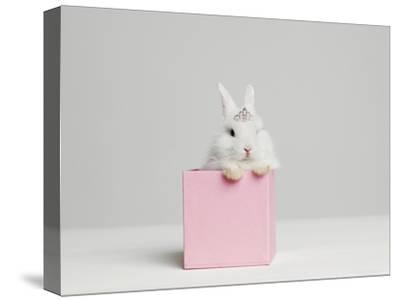 White Bunny Rabbit Wearing Tiara Sitting in Pink Box, Studio Shot-Roger Wright-Stretched Canvas Print