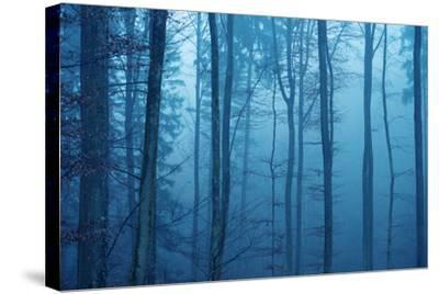 Wrapped in Blue-Philippe Sainte-Laudy-Stretched Canvas Print