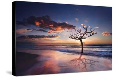 Tree in the Sea-Marco Carmassi-Stretched Canvas Print