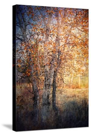 Kootenay Fall 2-Ursula Abresch-Stretched Canvas Print