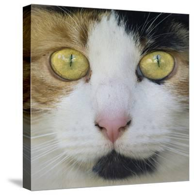 Hunters Eyes-Adrian Campfield-Stretched Canvas Print