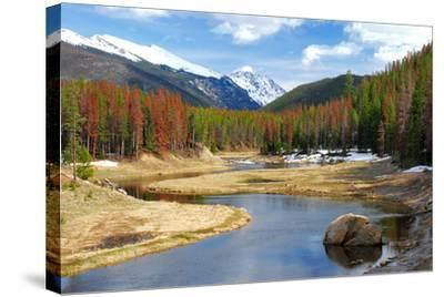 Winding Colorado River with Mountains and Pines-Terry Kruse-Stretched Canvas Print