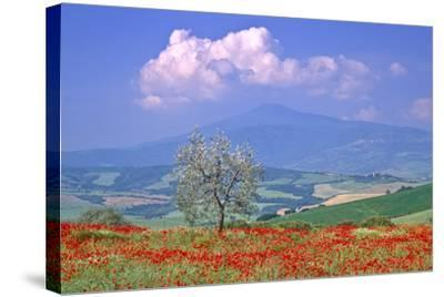 Val D'orcia Tuscany Itlay-Kathy Collins-Stretched Canvas Print