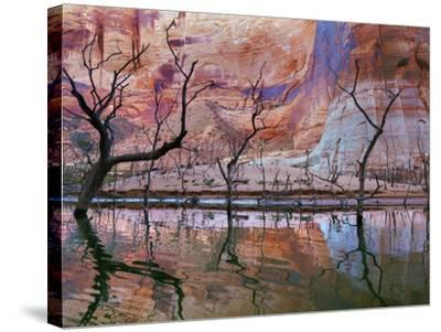 USA, Utah, Glen Canyon Nra. Drought Reveals Dead Trees-Jaynes Gallery-Stretched Canvas Print
