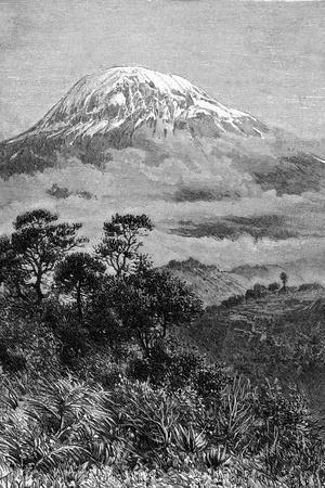 Tanzania, Kilimanjaro--Stretched Canvas Print