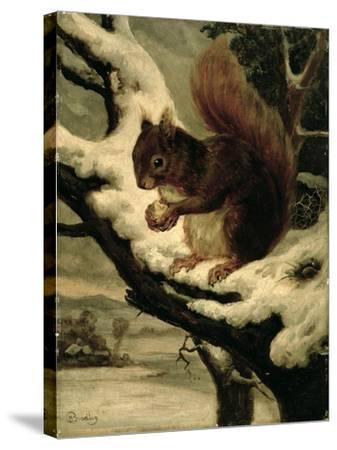 A Red Squirrel Eating a Nut-Basil Bradley-Stretched Canvas Print