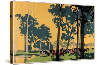 Dairying in Australia, from the Series 'Empire Buying Makes Busy Factories'-Frank Newbould-Stretched Canvas Print