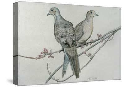 Two Birds on Branch-Rusty Frentner-Stretched Canvas Print