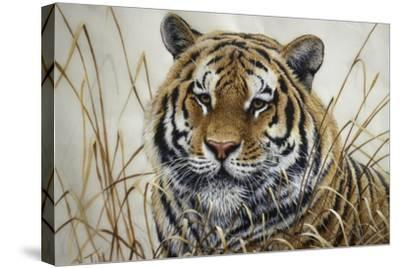 Tiger-Jeff Tift-Stretched Canvas Print