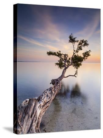 Water Tree X-Moises Levy-Stretched Canvas Print