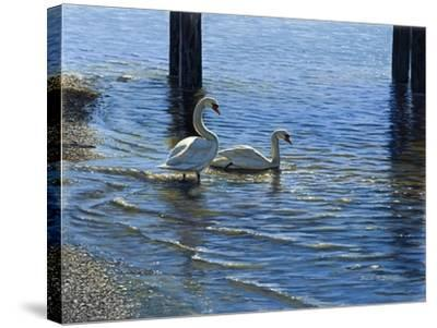 Glistening Water Swans-Bruce Dumas-Stretched Canvas Print