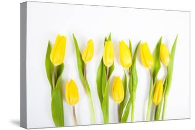 Yellow Tulips-Frank Lukasseck-Stretched Canvas Print