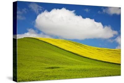 Rolling Hills of Canola and Pea Fields with Fresh Spring Color--Stretched Canvas Print